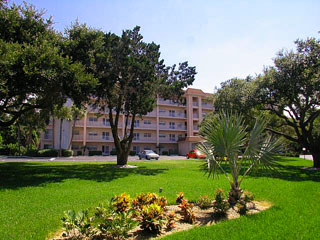 Siesta Key Condos Bay Tree